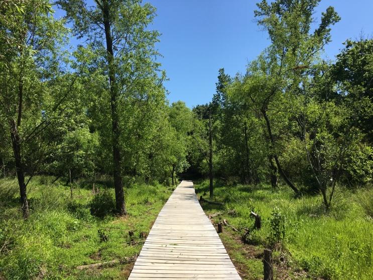 River Trail Trail.jpg