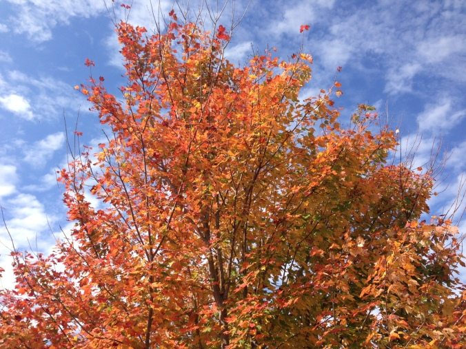 Fall Red Tree:Sky