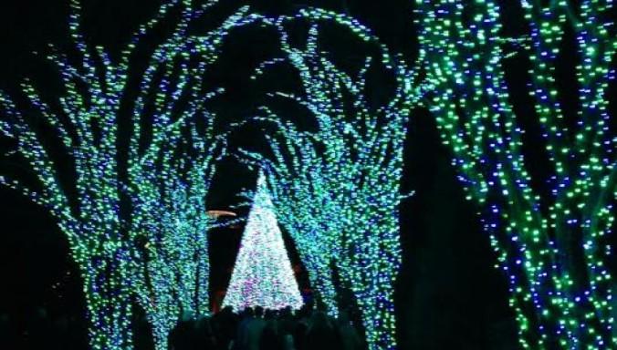 cropped-garden-lights-christmas-tree.jpg