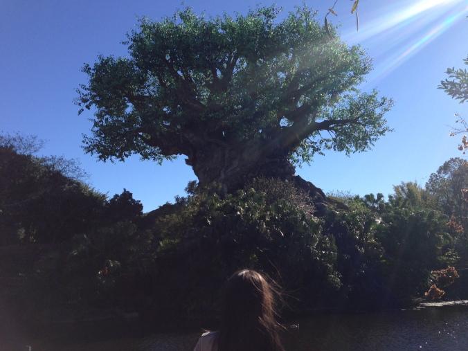Disney's Animal Kingdom. The tree of life.